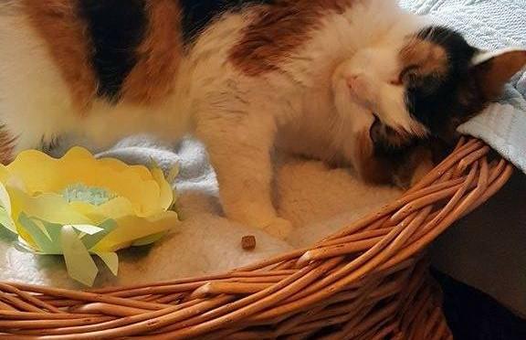 Gruzdžių katytė Laukė