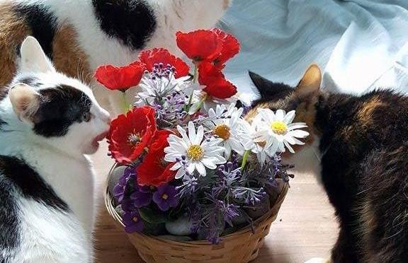 Gruzdžių katytės