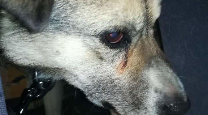 Bertužių šuo – 867612231