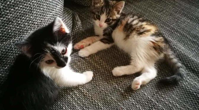 Korsako kačiukai – 860088223